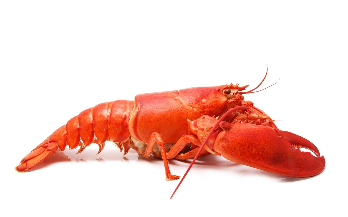 lobster_dreamstime_4498123